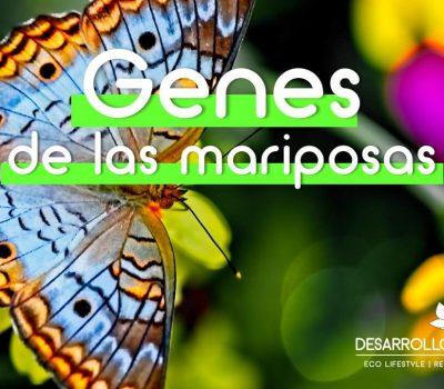 Un único gen causa el color de las mariposas